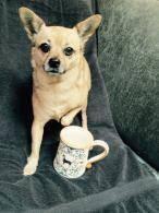 chihuahua-with-chihuahua-mug.jpg